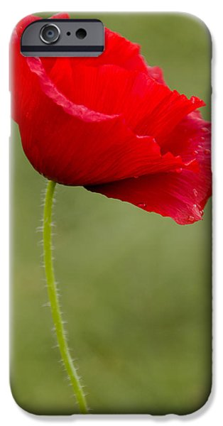 Ww1 iPhone Cases - Poppy iPhone Case by Ross G Strachan