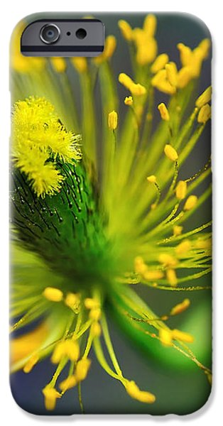 Poppy Seed Capsule 2 iPhone Case by Kaye Menner