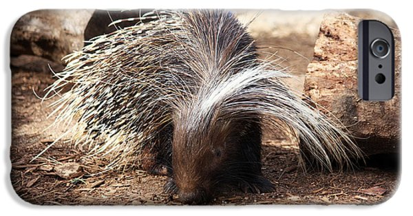 Fed iPhone Cases - Porcupine iPhone Case by Jeff Tuten