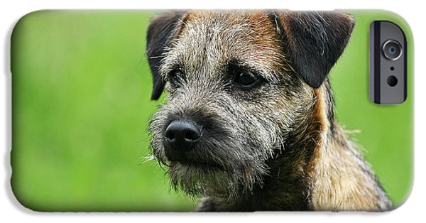 Dog Photos iPhone Cases - Portrait Border Terrier dog iPhone Case by Dog Photos