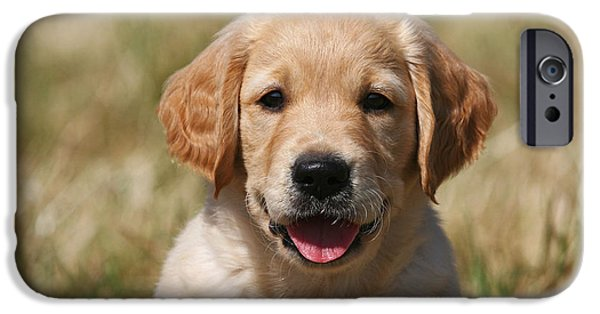 Dog Photos iPhone Cases - Portrait Golden Retriever Puppy iPhone Case by Dog Photos