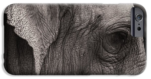 Elephant iPhone Cases - Portrait in Leather iPhone Case by Joseph Smith
