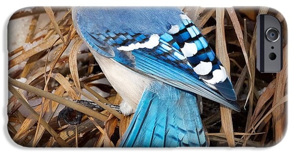 Bluejay iPhone Cases - Portrait Of A Blue Jay Square iPhone Case by Bill  Wakeley