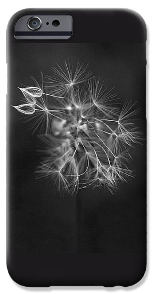 Floral Photographs iPhone Cases - Portrait of a Dandelion iPhone Case by Rona Black