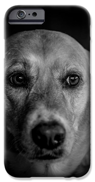 Black Dog iPhone Cases - Portrait of a Dog iPhone Case by Jim DeLillo