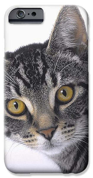 Portrait Of A Grey Tabby Catvancouver iPhone Case by Thomas Kitchin & Victoria Hurst