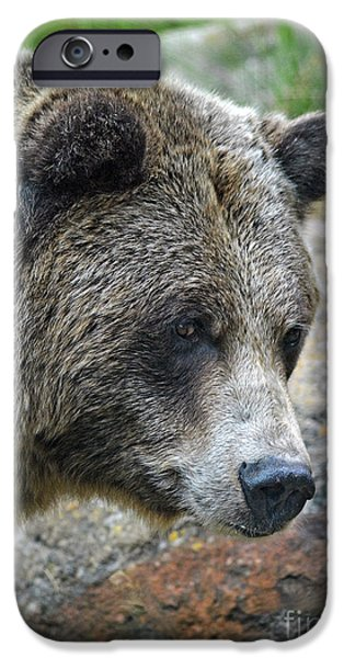 Walking Beat iPhone Cases - Portrait of a Grizzly Bear iPhone Case by Jim Fitzpatrick