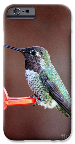 Cute Bird iPhone Cases - Portrait of a Hummingbird iPhone Case by Carol Groenen
