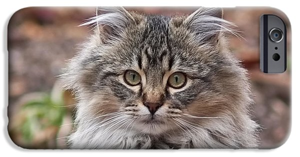 Kitten iPhone Cases - Portrait of a Maine Coon Kitten iPhone Case by Rona Black