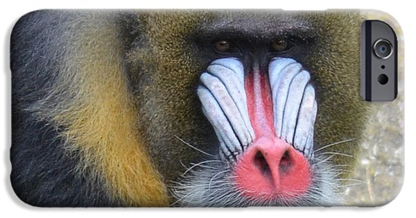 Four Animal Faces iPhone Cases - Portrait of a Mandrill iPhone Case by Jim Fitzpatrick