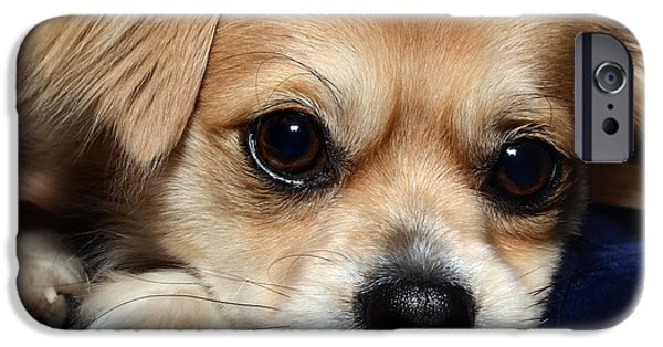 Dog Close-up iPhone Cases - Portrait of a Pup iPhone Case by Lisa Knechtel