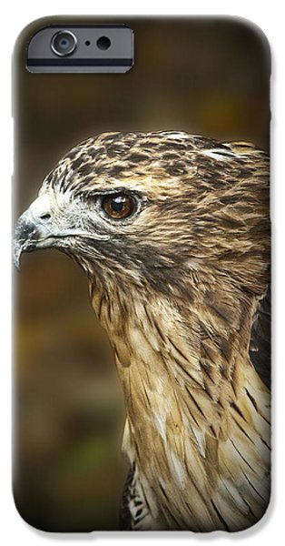 Hawk Art Print iPhone Cases - Portrait of a Red Tail Hawk iPhone Case by Randall Nyhof