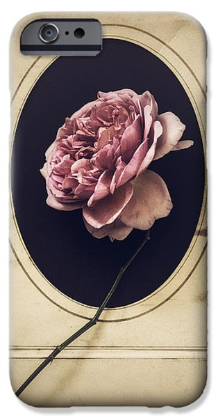 Rose iPhone Cases - Portrait of a Rose iPhone Case by Amy Weiss