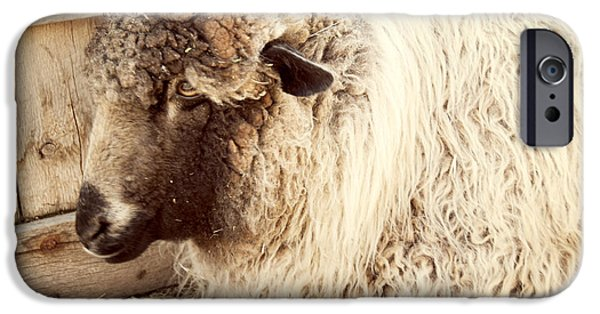 Agriculture iPhone Cases - Portrait of a Sheep iPhone Case by Juli Scalzi
