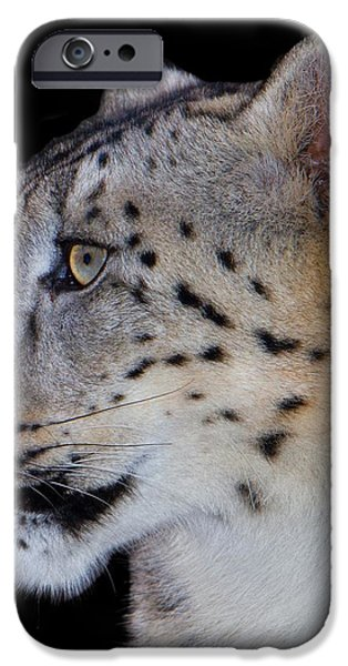 Portrait Of A Snow Leopard iPhone Case by John Absher
