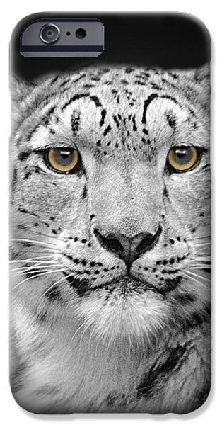 Snow iPhone Cases - Portrait Of A Snow Leopard iPhone Case by Linsey Williams