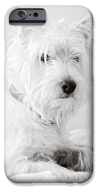 Cute Puppy iPhone Cases - Portrait of a Westie iPhone Case by Edward Fielding