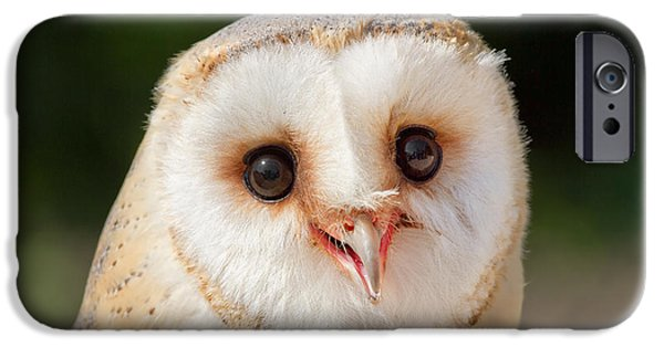 Barn Owl iPhone Cases - Portrait of a Young Barn Owl iPhone Case by Roeselien Raimond
