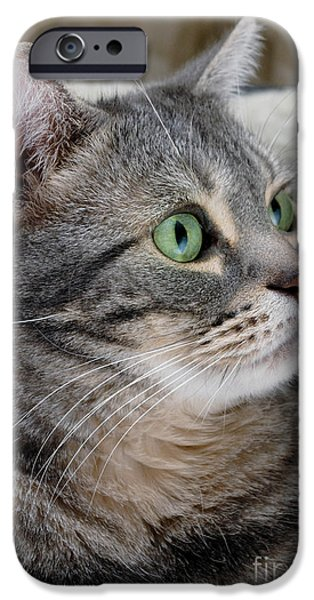American Shorthair iPhone Cases - Portrait of an Ameriican Shorthair Cat iPhone Case by Amy Cicconi