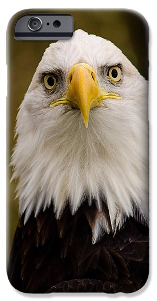 Jordan iPhone Cases - Portrait Of An Eagle iPhone Case by Jordan Blackstone