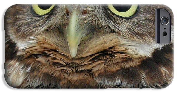 Raisa Gertsberg iPhone Cases - Portrait Of Burrowing Owl iPhone Case by Ben and Raisa Gertsberg