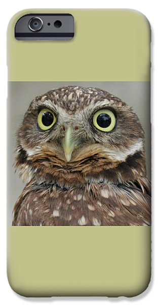 Brg iPhone Cases - Portrait Of Burrowing Owl iPhone Case by Ben and Raisa Gertsberg