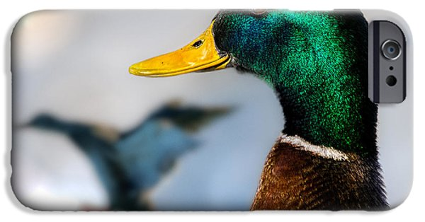 Duck iPhone Cases - Portrait of Duck 2 iPhone Case by Bob Orsillo