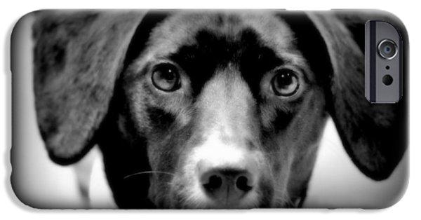 Mixed Labrador Retriever iPhone Cases - Portrait Of Mans Best Friend II iPhone Case by Aurelio Zucco