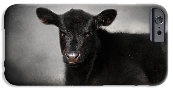 Black Angus iPhone Cases - Portrait of the Black Angus Calf iPhone Case by Jai Johnson