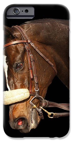 Year Of The Horse iPhone Cases - Portrait of Zenyatta iPhone Case by Cheryl Ann Quigley