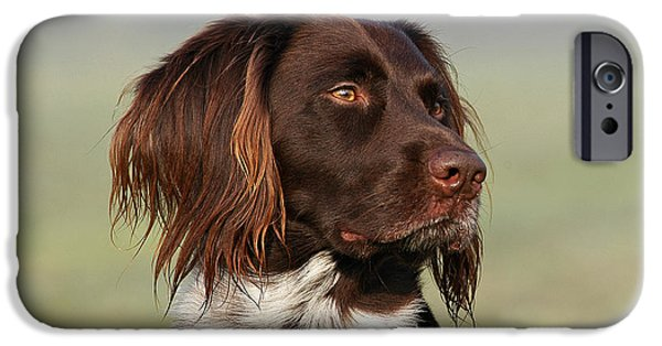 Dog Photos iPhone Cases - Portrait small Munsterlander dog iPhone Case by Dog Photos