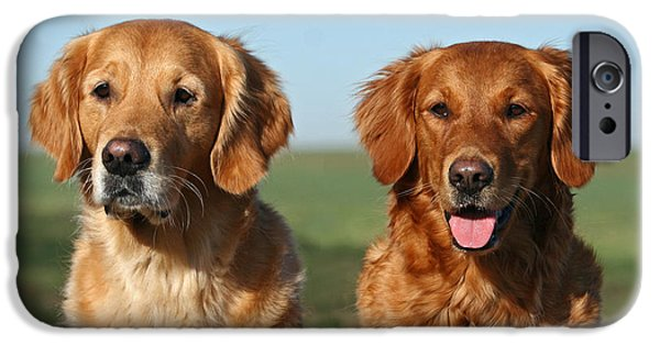 Dog Photos iPhone Cases - Portrait two Golden Retriever dogs iPhone Case by Dog Photos