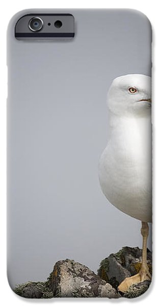 Posed Gull iPhone Case by Anne Gilbert