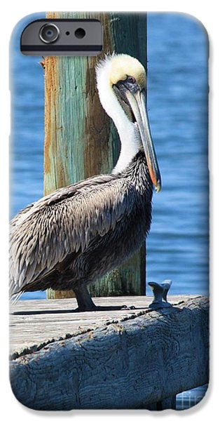 Animals Photographs iPhone Cases - Posing Pelican iPhone Case by Carol Groenen