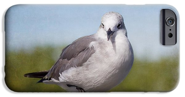 House Art Photographs iPhone Cases - Posing Seagull iPhone Case by Kim Hojnacki