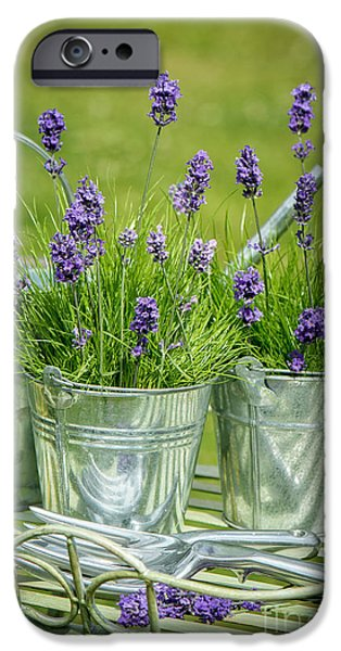 Flowerpot iPhone Cases - Pots Of Lavender iPhone Case by Amanda And Christopher Elwell