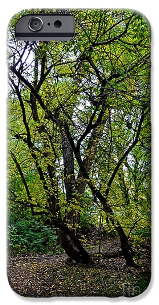 Poudre Trees iPhone Case by Baywest Imaging