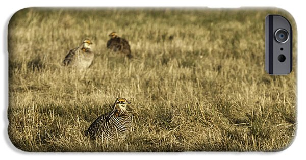 Matting Photographs iPhone Cases - Prairie Chickens after the Boom iPhone Case by Thomas Young