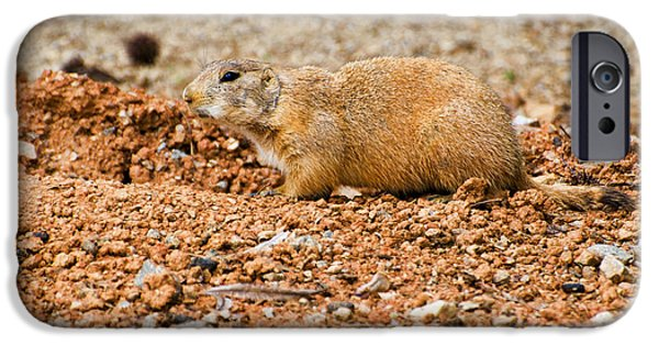 Prairie Dogs iPhone Cases - Prairie dog at edge of den  iPhone Case by Chris Flees