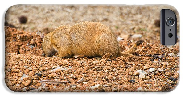 Prairie Dogs iPhone Cases - Prairie Dog into iPhone Case by Chris Flees