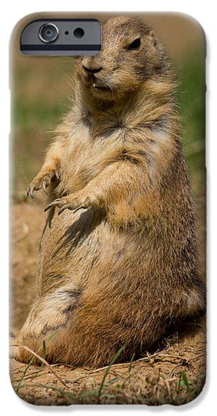 Mounds iPhone Cases - Prairie Dog iPhone Case by Leah Palmer