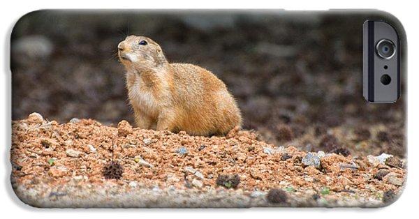 Prairie Dogs iPhone Cases - Prairie Dog on alert  iPhone Case by Chris Flees