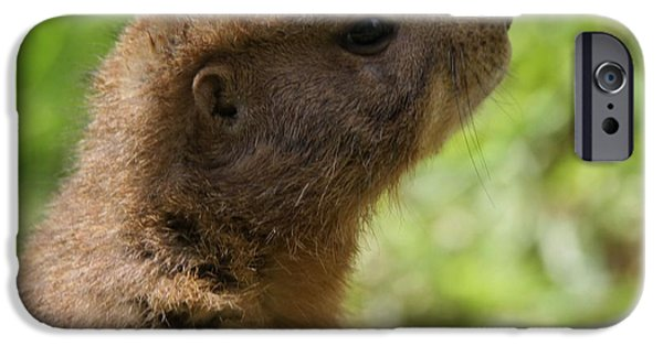 Prairie Dogs iPhone Cases - Prairie Dog Portrait iPhone Case by Dan Sproul