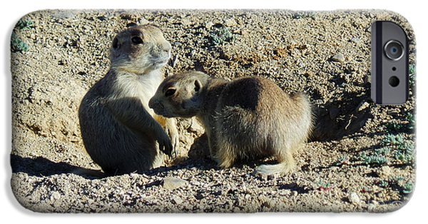 Prairie Dogs iPhone Cases - Prairie Dogs iPhone Case by David Bearden