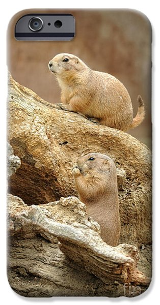 Prairie Dogs iPhone Cases - Prairie Dogs iPhone Case by HD Connelly
