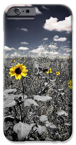 Prairie iPhone Cases - Prairie Sunflowers  iPhone Case by Elena Elisseeva