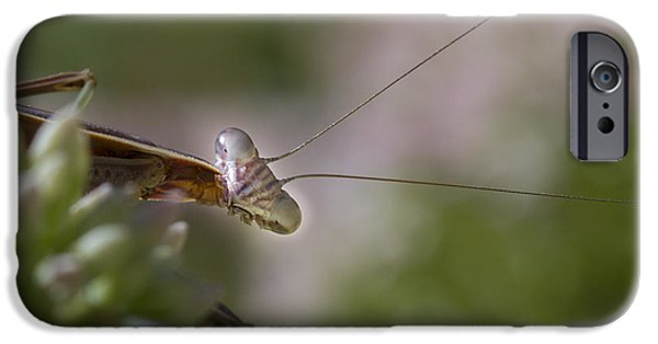 Mantises iPhone Cases - Praying Mantis Curiosity iPhone Case by Jean Noren