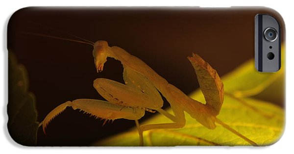 Bugs Pyrography iPhone Cases - Praying Mantis iPhone Case by Frank Fodor