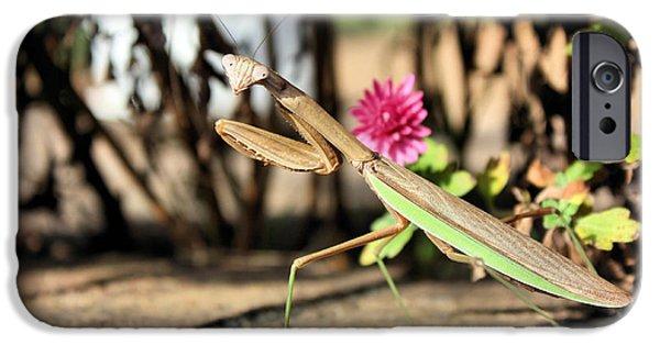 Mantodea iPhone Cases - Praying Mantis iPhone Case by Kristin Elmquist