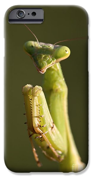 Mantodea iPhone Cases - Praying Mantis Macro Portrait iPhone Case by Brandon Alms
